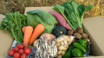 Organic vegetable set 7 items